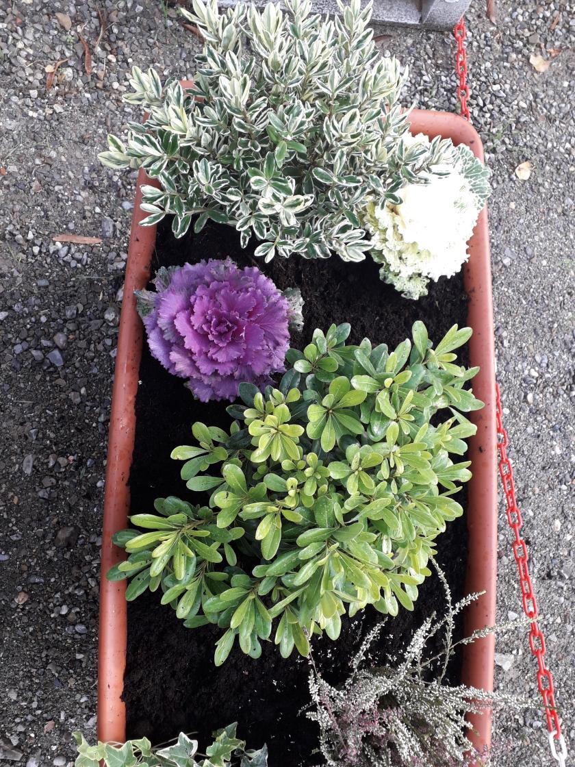 fiori di Reggiolacittainvisibile